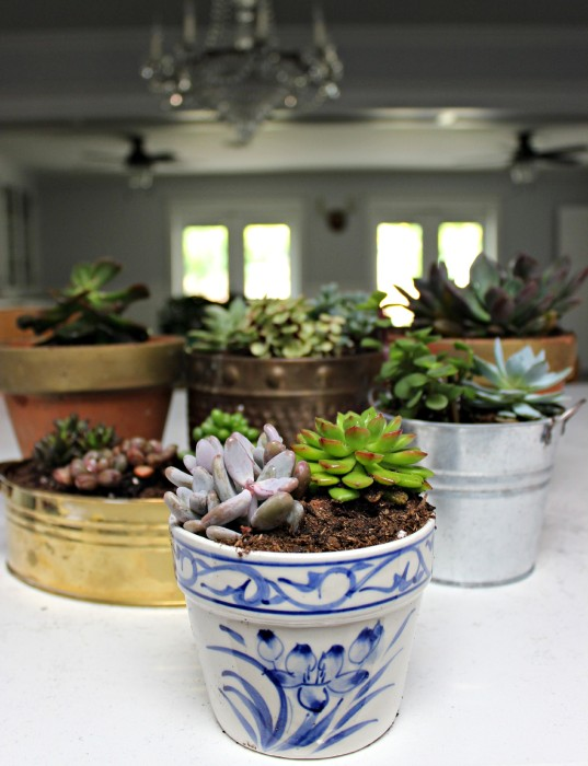 indoor-succulents