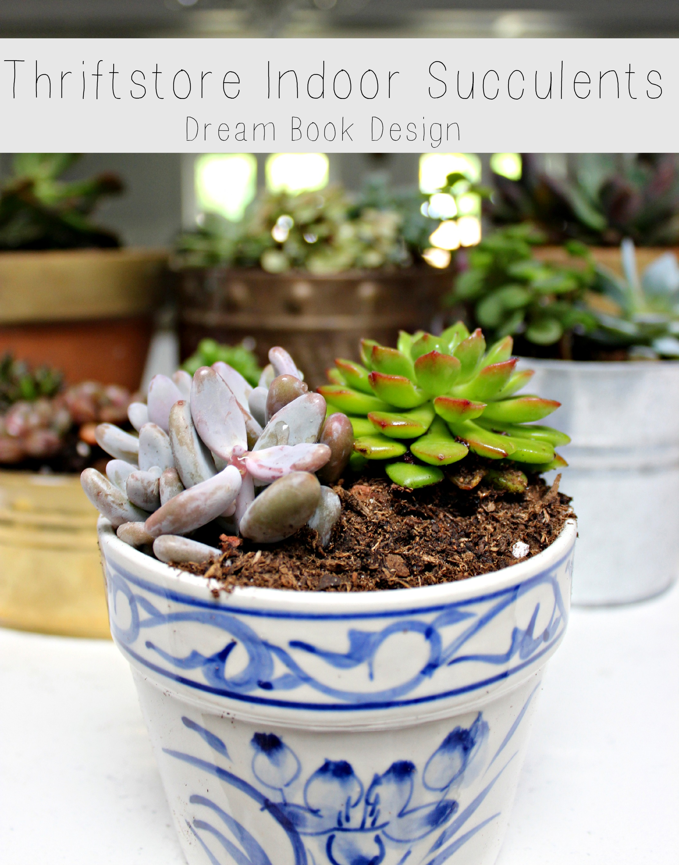 Thrift store indoor succulents dream book design for How to keep succulents alive indoors