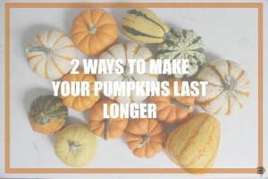 2 Ways To Make Your Pumpkins Last Longer